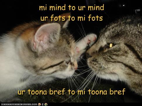 breath caption captioned cat Cats mind my Staring thoughts tuna yours - 5265968128
