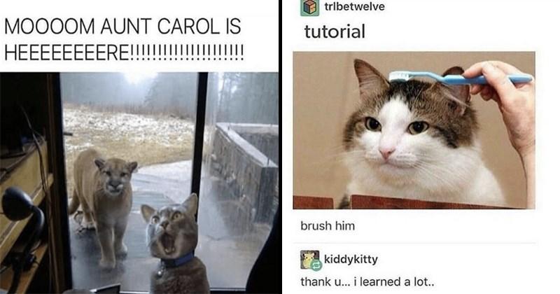 pets Memes Cats - 5266181