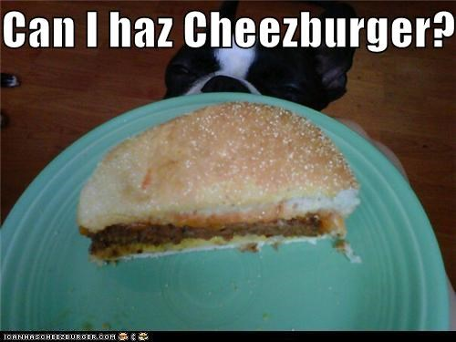 Cheezburger Image 5266357248