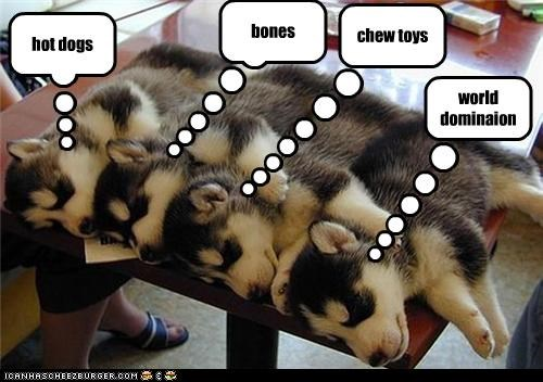 world dominaion chew toys bones hot dogs