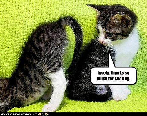 butt caption captioned cat Cats kitten lovely much sharing Staring thanks - 5266661376