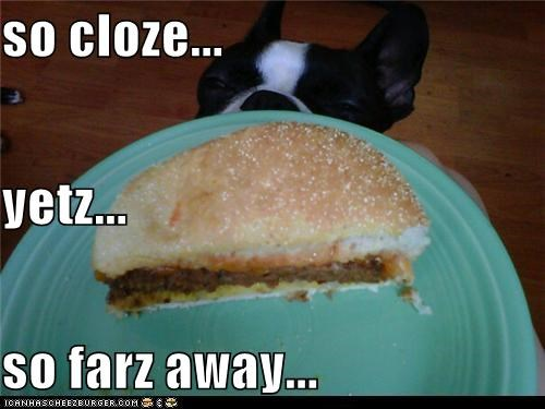 Cheezburger Image 5266696704
