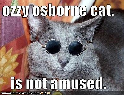animals Cats I Can Has Cheezburger look alikes not amused Ozzy Osbourne sunglasses - 5266832128