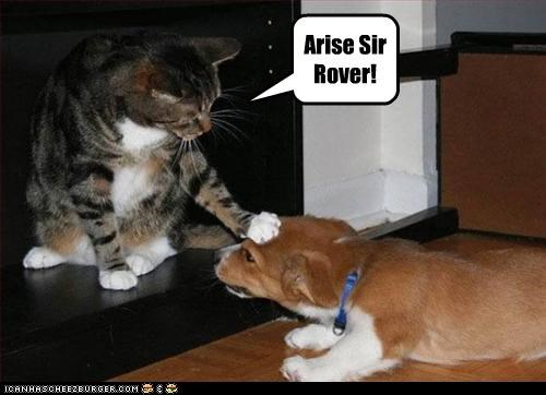 arise,caption,captioned,cat,dogs,knighting,rover,sir