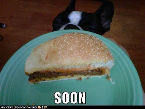 Cheezburger Image 5267059200
