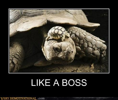 animals hilarious Like a Boss turtle - 5267264768