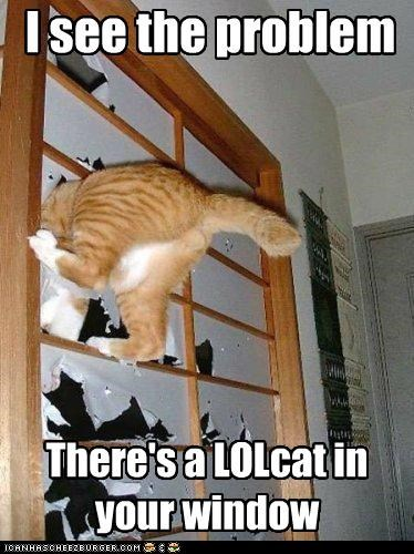 caption captioned cat is lolcat problem see stuck tabby there window - 5267518208