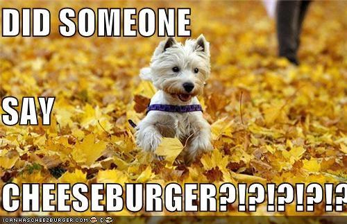 Cheezburger Image 5267584512