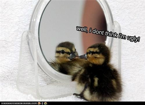 baby caption captioned cygnet dont duckling I swan the ugly duckling think ugly well