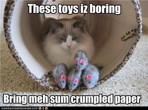 These toys iz boring Bring meh sum crumpled paper