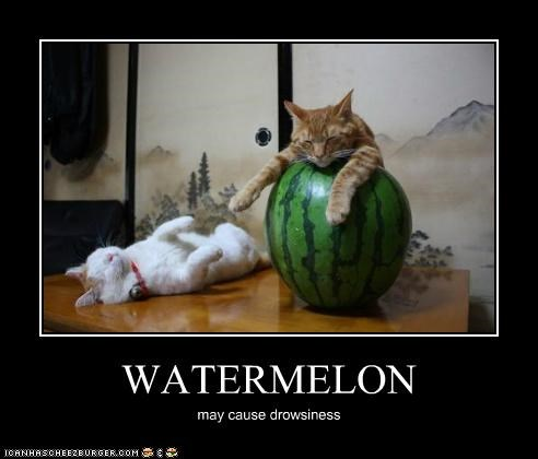 caption,captioned,cat,Cats,cause,drowsiness,drowsy,Hall of Fame,lazy,lolwut,may,sleeping,watermelon
