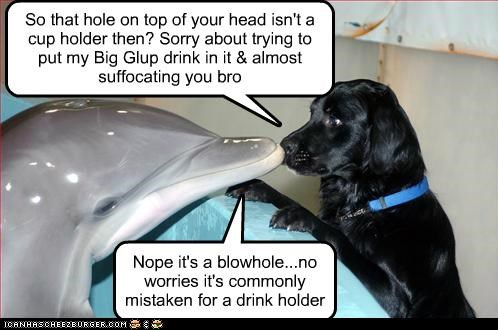 Black Lab,conversation,dolphin,friends,labrador retriever,mistake,nose to nose,oops,sorry,talking