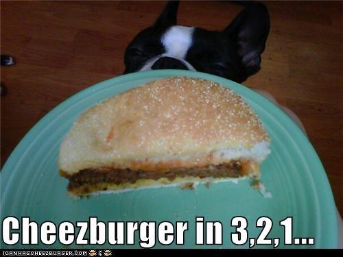 Cheezburger Image 5269438720