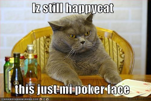 cards grey happycat lolcats poker - 526946560