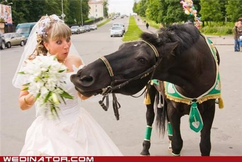 bride,funny wedding photos,horse