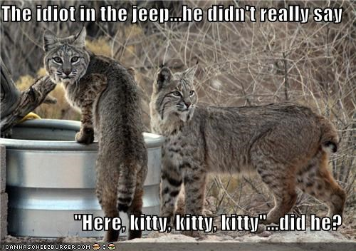 annoyed caption captioned clarifying confused idiot jeep kitty lynx lynxes question upset - 5270115072