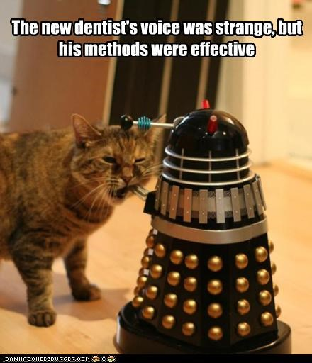 best of the week,caption,captioned,cat,chewing,dalek,dentist,doctor who,effective,Hall of Fame,methods,new,nomming,strange,toy,voice