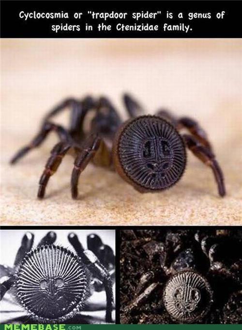 creepy IRL spider - 5270511360