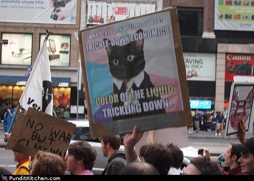 Business Cat Memes Occupy Wall Street political pictures - 5270691840