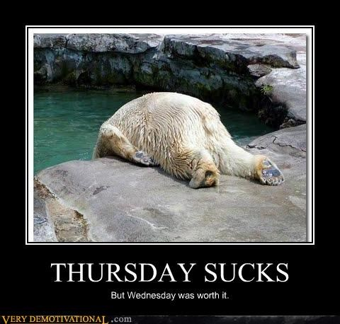 Thursday meme of a bear