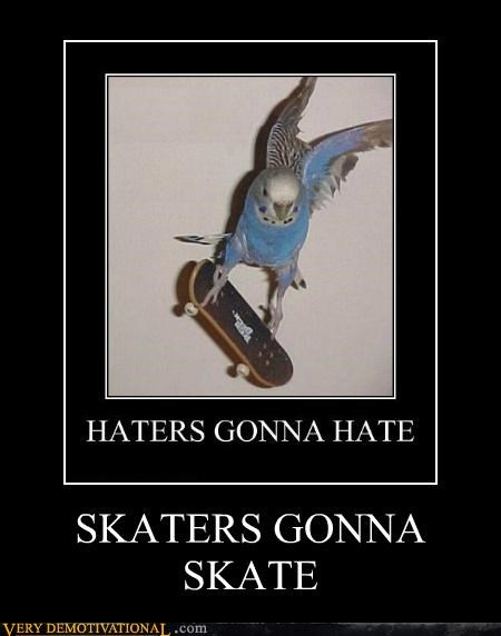 animals,bird,hilarious,skate,skaters