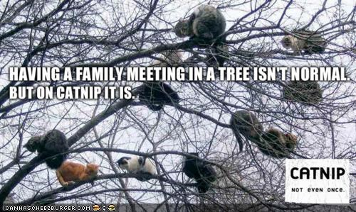 catnip lots of cats meetings memecats Memes meth nip Not Even Once trees - 5271110656