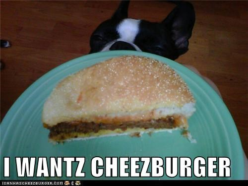 Cheezburger Image 5271272960