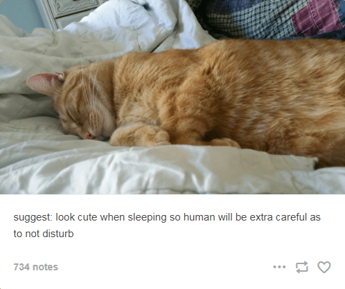 cat suggestions for how to manipulate humans