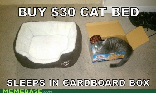 bed,box,cardboard,cat,Memes