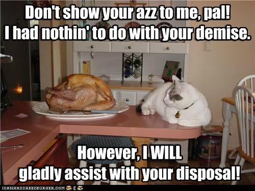 assist,butt,caption,captioned,cat,confused,disposal,do want,dont,insult,lolwut,noms,rude,show,Turkey