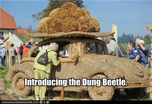 car dung dung beetle pun volkswagen - 5271790080