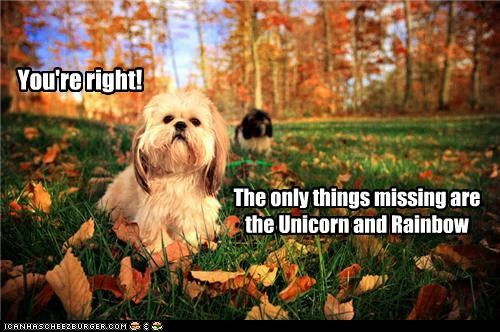 autumn,grass,having fun,leaves,outdoors,perfect picture,playing,rainbow,shih tzu,unicorn