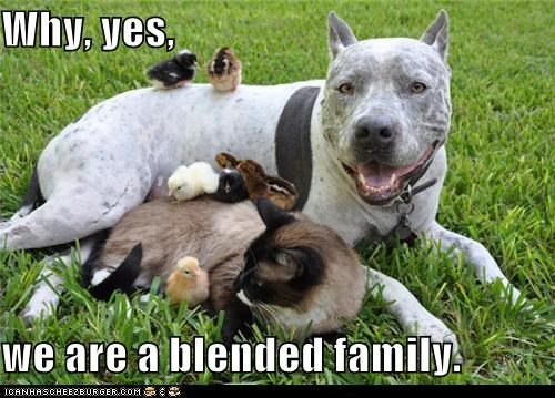 adopted,adorbz,awww,blended family,cat,chickens,chicks,family,friends,love,pitbull
