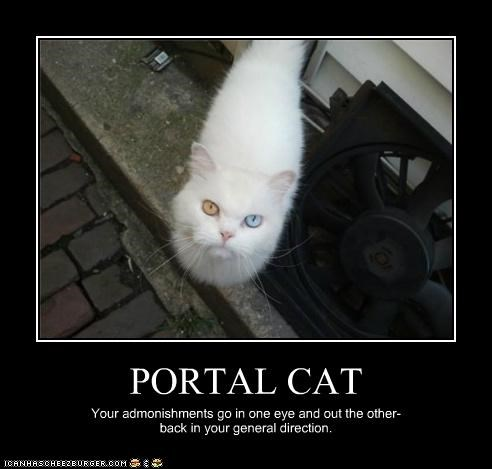 PORTAL CAT Your admonishments go in one eye and out the other- back in your general direction.