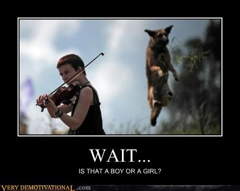androgyny dogs hilarious violin - 5272645632