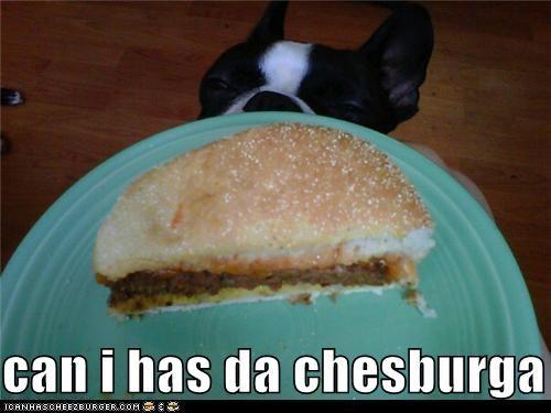 Cheezburger Image 5272746496