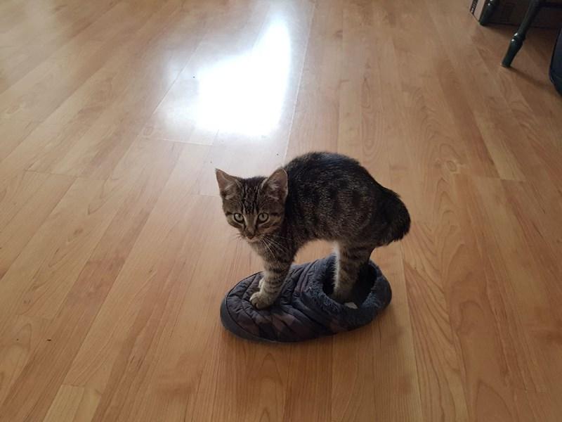 cute funny kitten story - 5272837