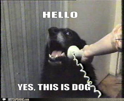 animals,best of the week,dogs,Hall of Fame,hello,i has a hotdog,phones,stupid,this is dog,wat