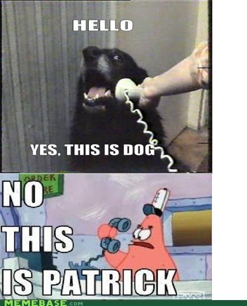 dogs hello patrick phone pushing patrick what - 5273211648