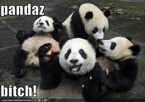 animals,gangs,I Can Has Cheezburger,panda bears,panda,wtf