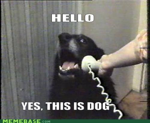 animemes dogs hello Memes phone real what - 5273657600