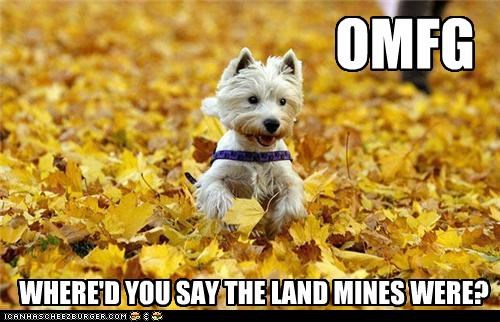 animals,demolition,dogs,i has a hotdog,landmines,leaves,running