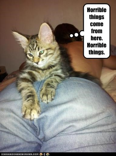 caption captioned cat come from here horrible insinuating location pointing things