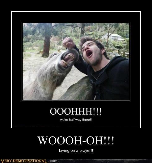 animals donkey dude hilarious song - 5274007040