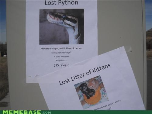 eaten IRL kitten lost sign snake - 5274224640