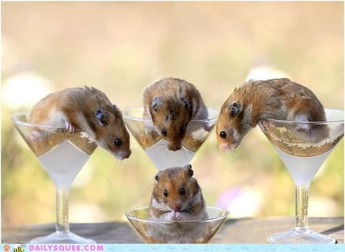 acting like animals announcement Awkward contest hamster hamsters miss universe pun winner - 5274668288