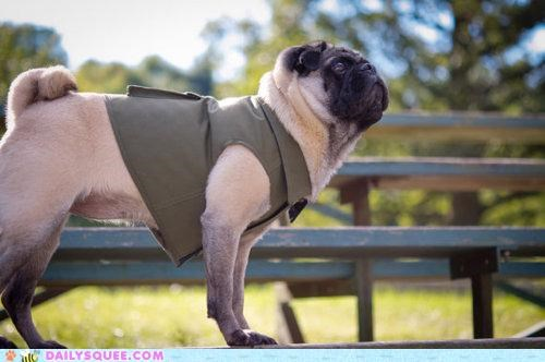 acting like animals dogs etsy eyes fashion gaze lingering model modeling pose posing pug stare Staring vest zoolander
