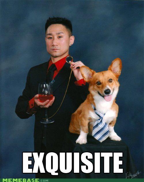 animemes dogs fancy Memes - 5275218176