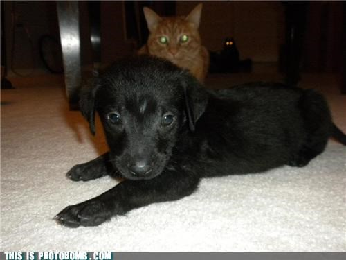 Animal Bomb animals Cats dogs pets shadowlurker - 5275429632