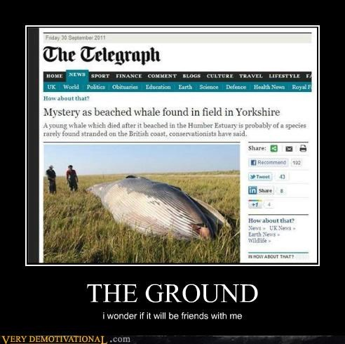 ground hilarious hitchhikers-guide news telegraph whale - 5275774208